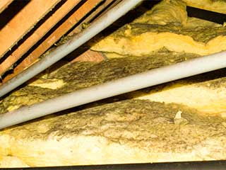 Attic insulation removal attic cleaning san rafael ca attic insulation removal solutioingenieria Images